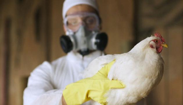 В РФ подтвердили первый случай заражения человека птичьим гриппом