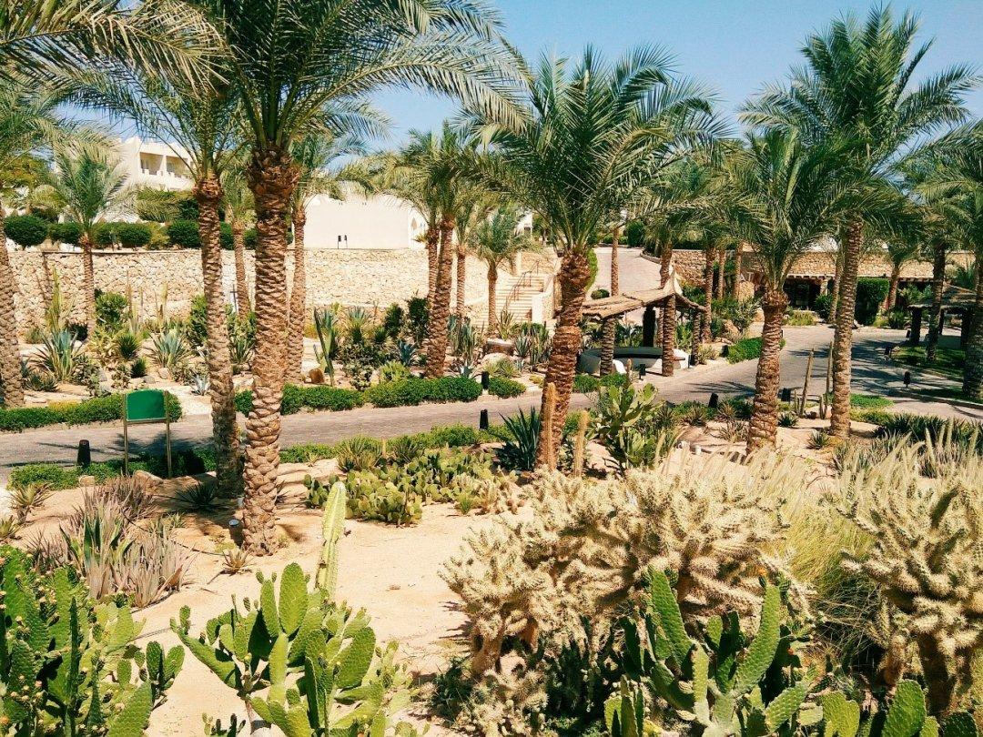 Отель Sentido Reef oasis в Шарм-эш-Шейхе