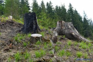 Держлісагентство: Штраф за порушення пожежної безпеки у лісі - до 8500 гривень