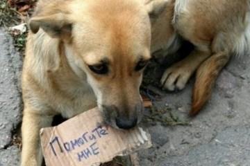 Aujourd'hui marque la Journée mondiale contre l'abandon des animaux de compagnie