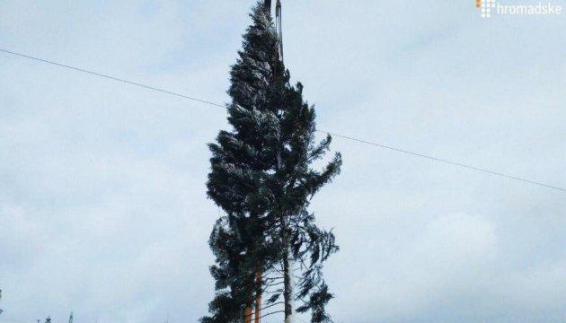 В Киеве установили главную елку Украины