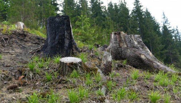 Рада хочет усилить охрану лесов в Карпатах