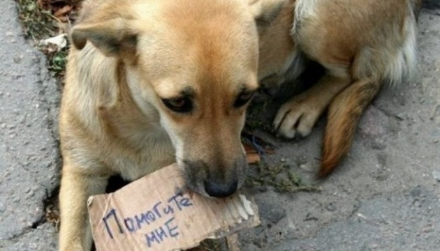 В Киеве стартует второй сезон соцрекламы в защиту животных
