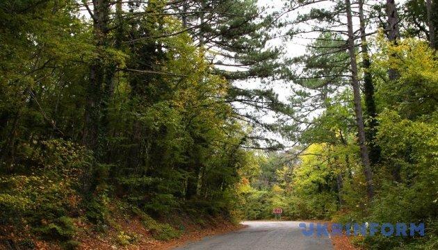 Прокуратура судиться з екс-віце-прем'єром за 40 гектарів лісу на Черкащині