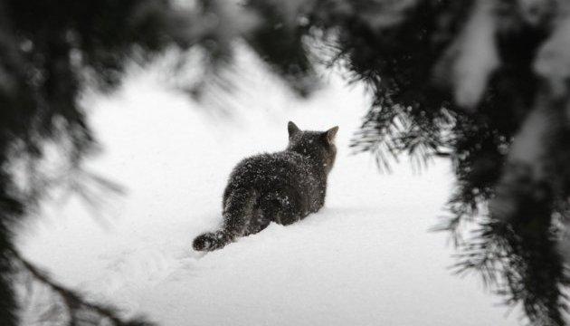 Украинцам в понедельник обещают потепление и снег