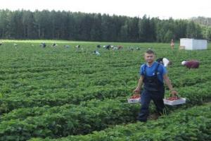Finnland empfiehlt Corona-Impfungen für ukrainische Saisonarbeiter