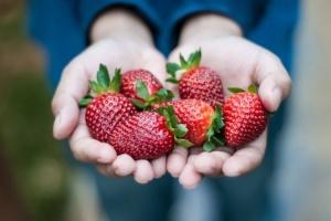 Полуниця очолює рейтинг найбільш забруднених пестицидами продуктів