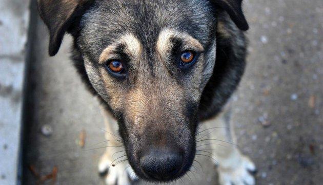 Захист тварин в Україні: як уберегти їх від людей