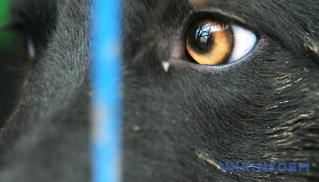 На Херсонщине собаки насмерть загрызли мужчину