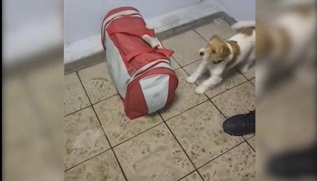 На Харківщині прикордонний пес винюхав у буханці хліба наркотики