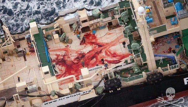 Австралійський міністр засудив Японію за ігнорування заборони китобійного промислу