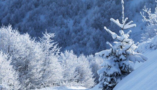 23 января: народный календарь и астровестник