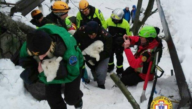 В Италии из накрытого лавиной отеля достали трех живых щенков