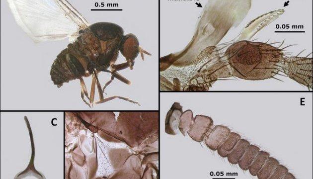В Австралії виявили новий вид паразитів