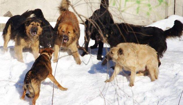 На Харківщині зграя бродячих собак напала на дитину, яка йшла до школи