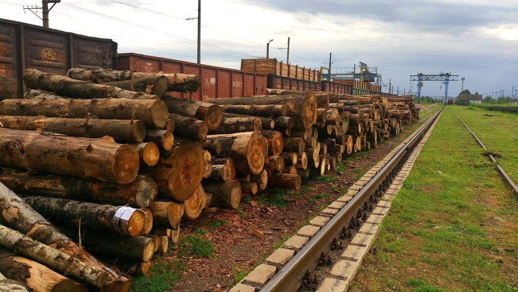 Деревина, яку держлісгоспи під виглядом дров намагалися вивезти через Закарпаття в Євросоюз (серпень 2016р.)