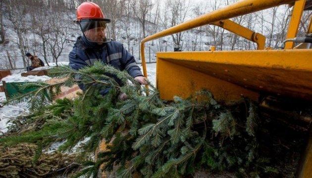 В Киеве утилизировали 10 тысяч новогодних елок