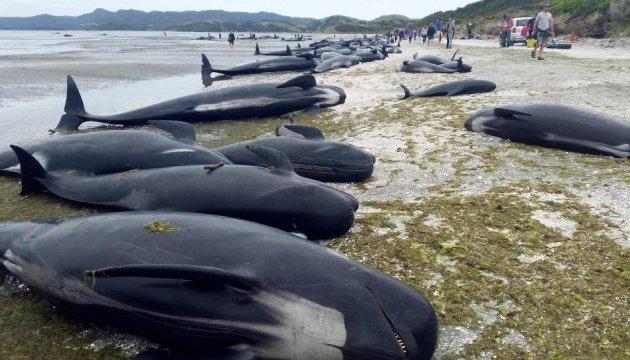 В Новой Зеландии добровольцы помогают выбросившимся на берег дельфинам