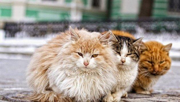 У Харкові теж хочуть визнати котів частиною екосистеми
