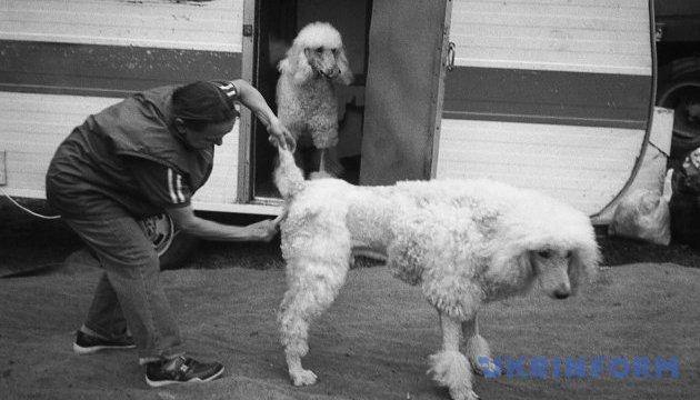 У Чехії хочуть заборонити використовувати тварин у цирках