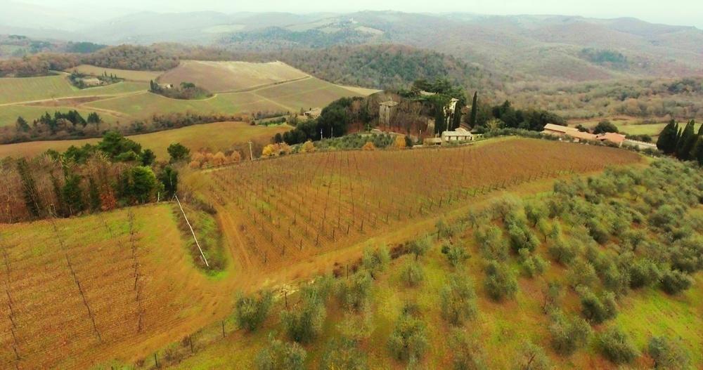 Виноградники в Італії