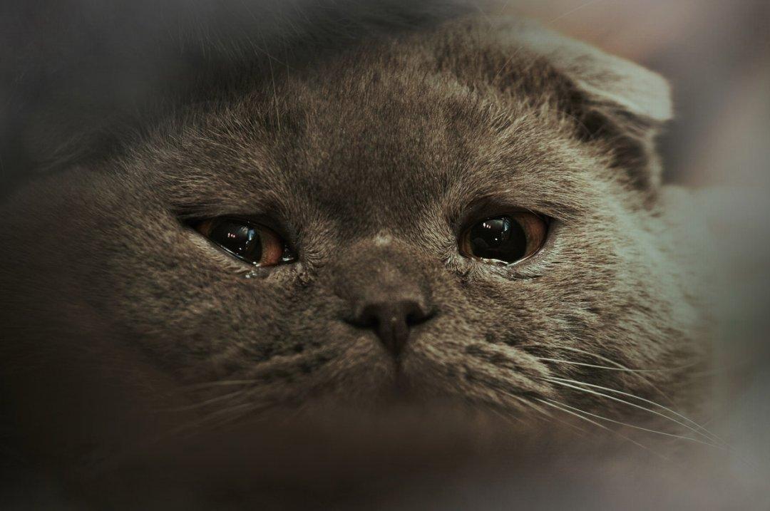 коронавирус симптомы у кошки