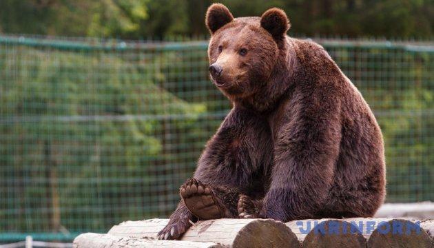 Місце, де вчать любити ведмедів