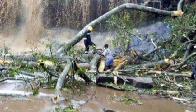 Огромное дерево насмерть раздавило 20 туристов
