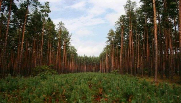 Госагентство планирует в этом году воссоздать леса на более 50 тысяч гектаров