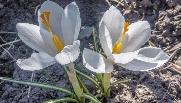 29 березня: народний календар і астровісник
