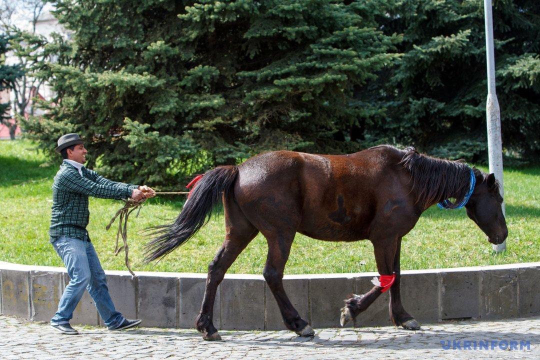 Чоловік веде коня під час Міжнародного дня ромів, Ужгород, 8 квітня 2017 року. Фото: Сергій Гудак