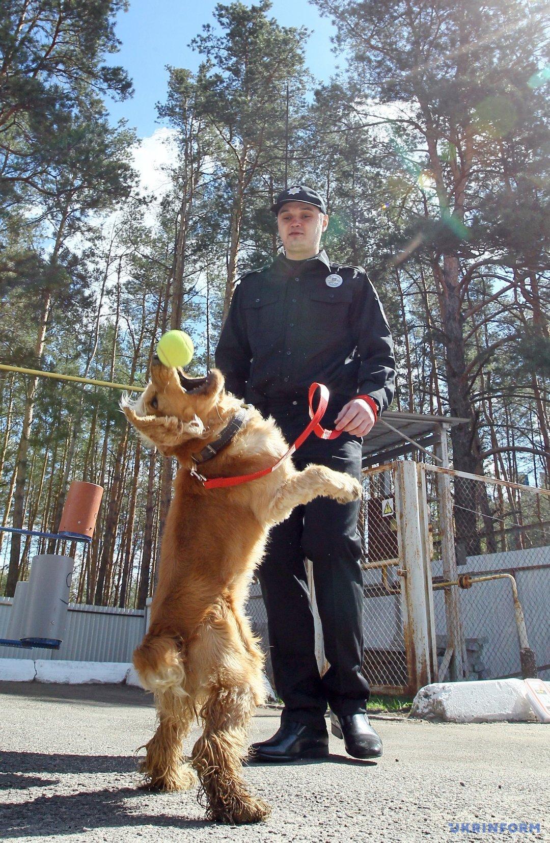 Поліцейський із пошуковим собакою Чіпом на території Кінологічного центру ГУ МВС України у Київській області, Ірпінь, Київська область, 12 квітня 2017 року. Фото: Володимир Тарасов