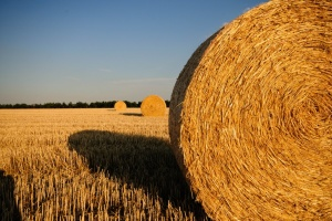 В Минэкономики сказали, сколько будет стоить гектар украинской земли