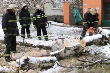 Снег на Днепропетровщине: из-за падения дерева погиб человек