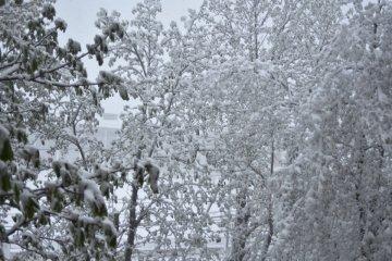 Одесчину накрывает снежная метель