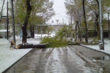 На Запорожскую область надвигаются снегопады и шквальный ветер