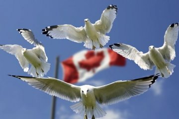 Canadian opposition supports UN peacekeeping mission in Donbas