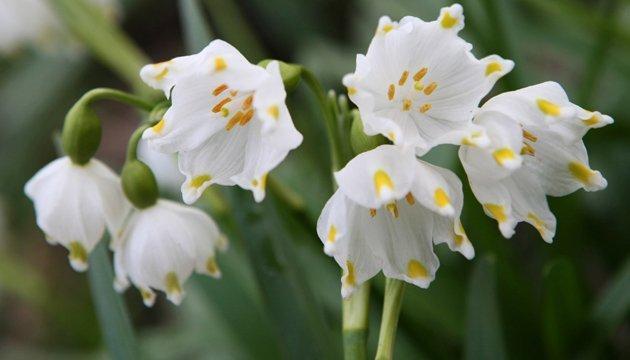 7 квітня: народний календар і астровісник