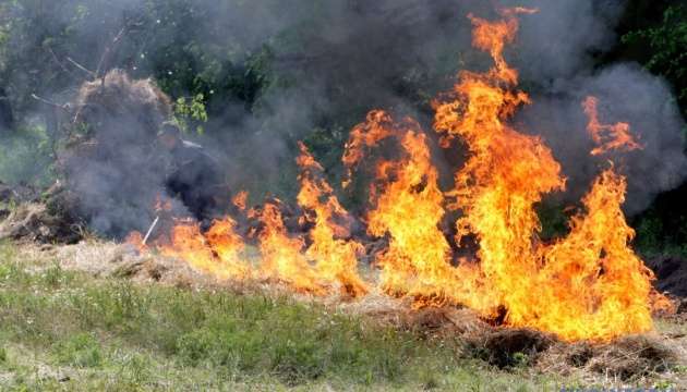 На Херсонщині вигоріли 4 гектари лісу