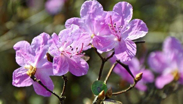 24 квітня: народний календар і астровісник