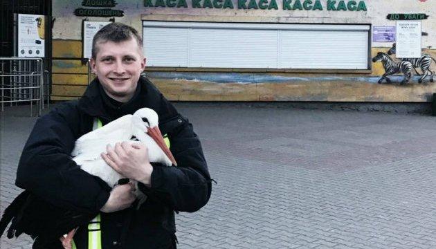 В центре Киева патрульные спасли аиста