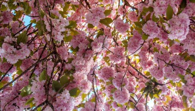 Le bal des fleurs en Transcarpatie : quand s'y rendre ?