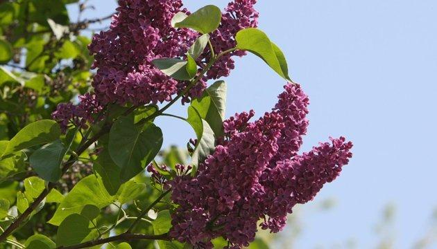 4 травня: народний календар і астровісник