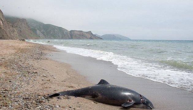 Біля берегів Чорного моря в Криму сталася масова загибель дельфінів