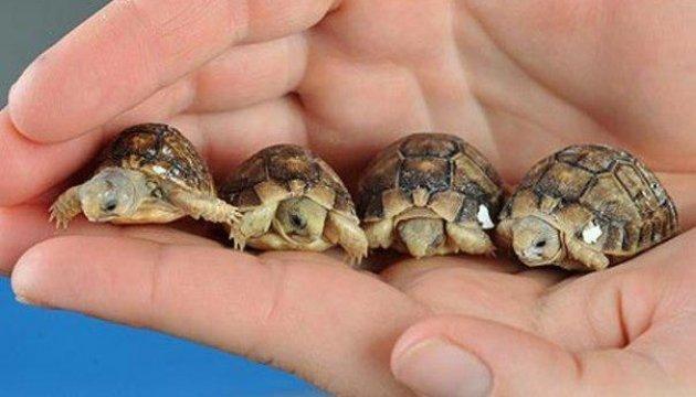 La Journée mondiale de la tortue célébrée au zoo de Rivne