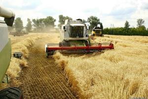 В Україні вже намолотили понад 50 мільйонів тонн зерна