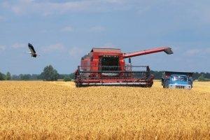 Уряд направив аграріями 125 мільйона на компенсацію відсотків за кредитами