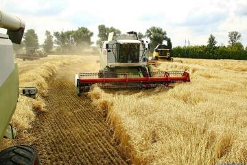 В Украине уже намолотили более 50 миллионов тонн зерна