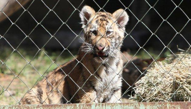 На Вінниччині 1200 дітям з незаможних родин улаштували свято в зоопарку