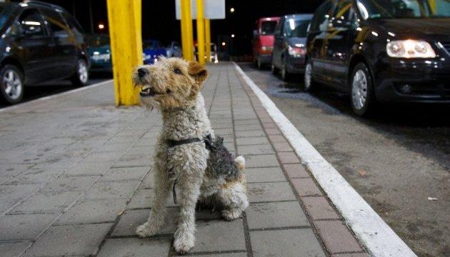 Британцы попытаются научить собак обнаруживать коронавирус